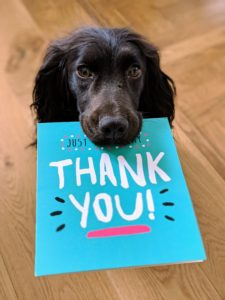 Black dog holding a greeting card with the words Thank You! Photograph by Howard Riminton