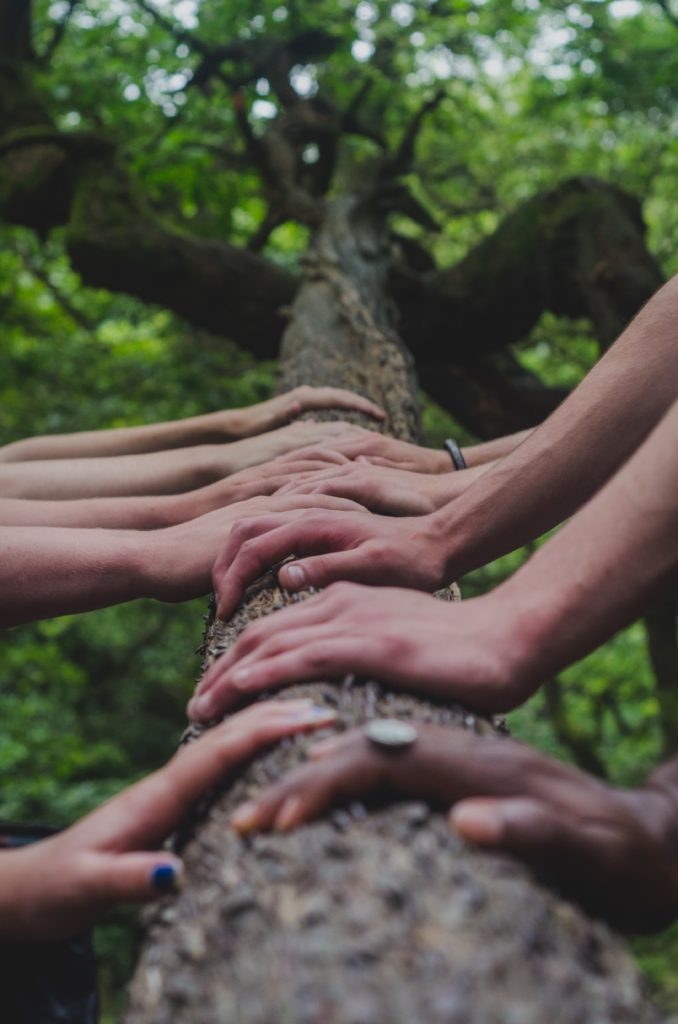 Diverse hands touching a tree trunk, looking up at the foliage. Photograph by Shane Rounce