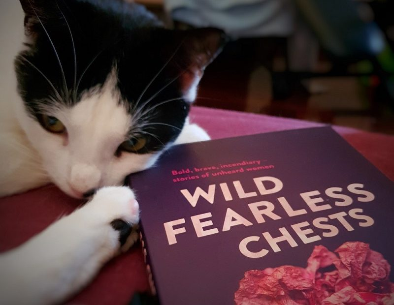Wild fearless chests book with small black and white cat curled around it