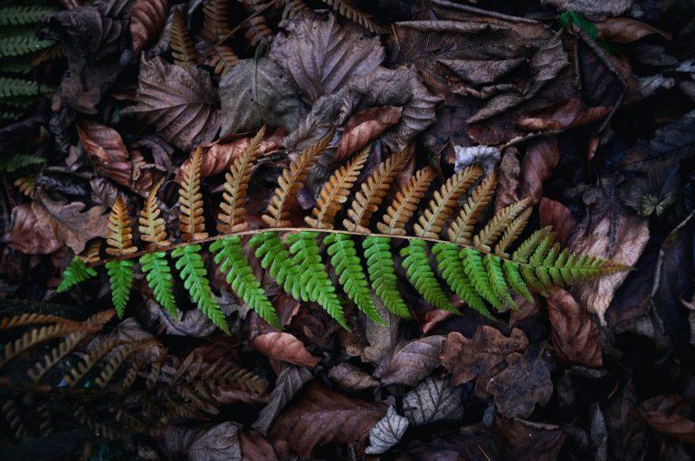 Yin Yang fern. Image by Mario Dobelmann.